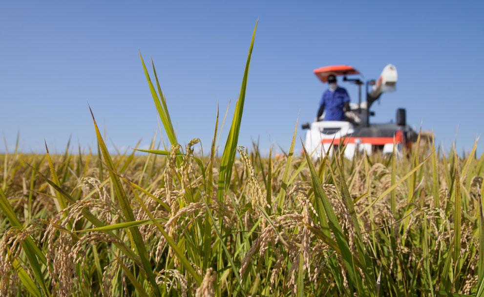 農業法人を設立するメリットは?企業の農業参入から個人農家 ...